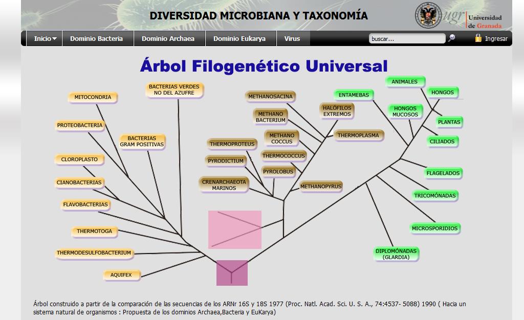 Página Web de Diversidad Microbiana y Taxonomia